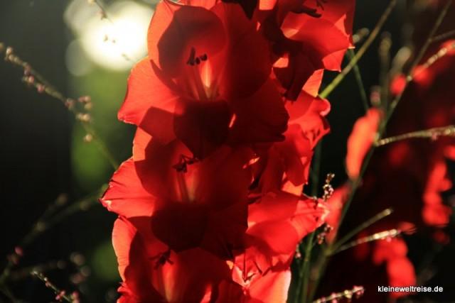 Blüten bei Gegenlicht