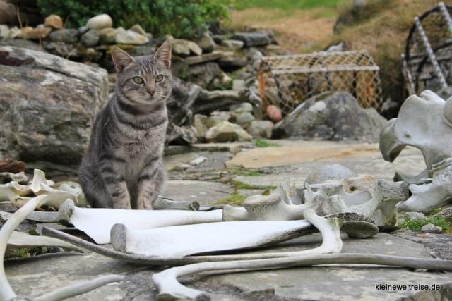 Walknochen und Katze im Glencolumcille Folk Village