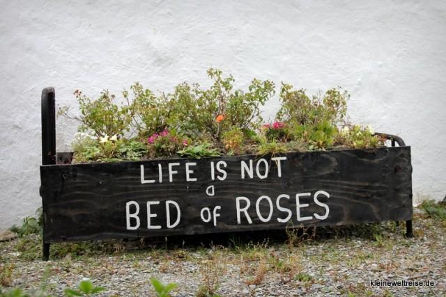 Das Leben ist kein Rosenbett
