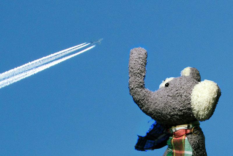 fanta schaut dem Flieger hinterher