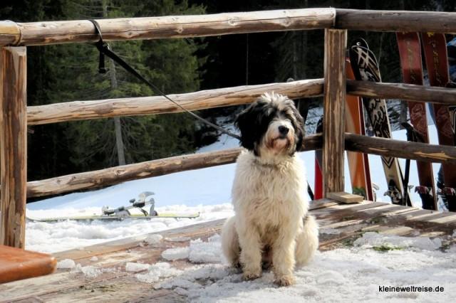 angebundener Hund auf der Hütte