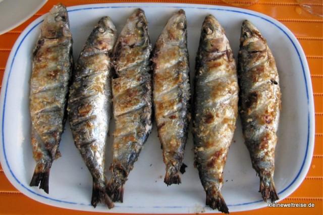 die Sardinen