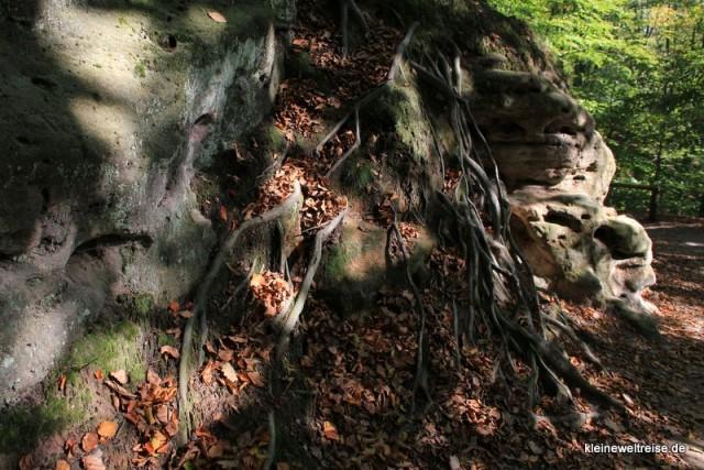 Die Wurzeln wachsen auf dem Fels